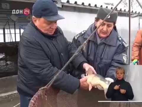 Об обследовании предприятия Ростовской области для включения в реестр предприятий-экспортёров живой рыбы