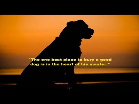 how to help a mourning dog