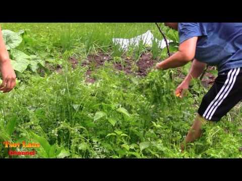 Hmong Farmer Hmoob Nyob Teb Chaws Toj Siab Txoj Ke Khwv