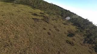 Fpv flight in the woods