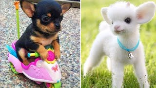 Baby Animals 🔴 Funny Cats and Dogs Videos Compilation (2019) Perros y Gatos Recopilación #5
