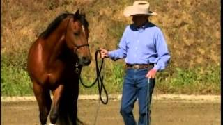 Charles Wilhelm shows how to properly lead a horse