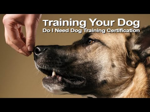 How To Train Your Dog | Do I Need Dog Training Certification ...