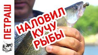 Наловил МНОГО РЫБЫ под ногами! Рыбалка в новом месте!