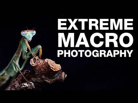 How to Shoot | Extreme Macro Photography