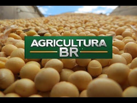 CANAL DO BOI – Programa Agricultura BR – 04/08/2017