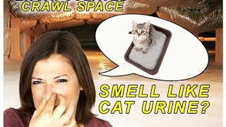 House Smells Like Cat Urine Kannapolis NC | Masserang Consulting | 704.787-6972