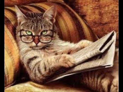 коты obs 6 рекл