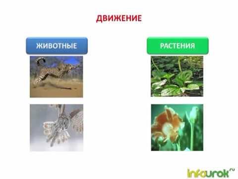 Богатые успешные люди россии