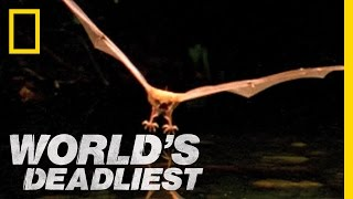 World's Deadliest - Fishing Bats