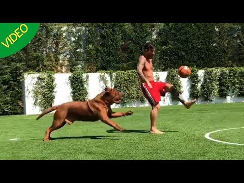 Lionel Messi Playing With His Pet Dog Hulk- Gone Viral