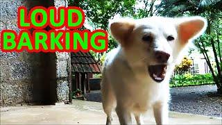 Dog barking sounds - Very loud dog bark sound effects