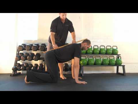 Bird Dog Core Exercise