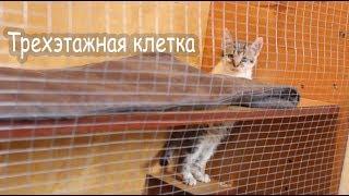 Клетка для ловли кошек своими руками