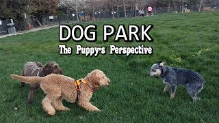Dog Park - Puppy Perspective