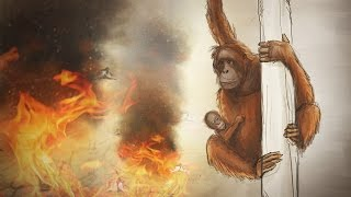 Why palm oil kills orangutans – an animated short story