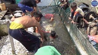 BAO TRÚNG BẦY CÁ BÁN TRÊN 100 000 000 Ở KIÊN GIANGcatch Fish In Vietnam