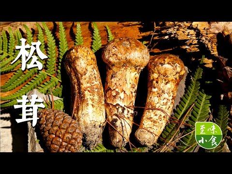 【松茸】菌中之王——松茸!带你了解这精灵般的食材,清香浓郁、口味丰富!|至味小食