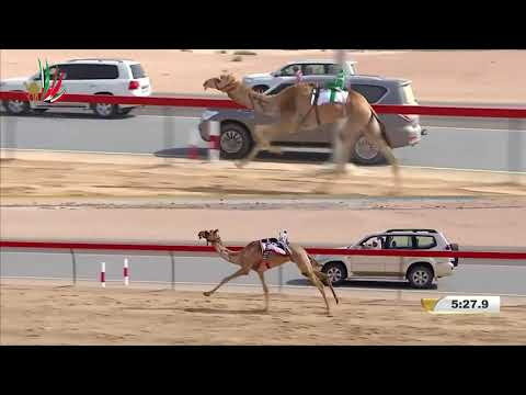 مهرجان ختامي المرموم- حقاقة للشيوخ 1-4-2018 م- ش10 هملول لـ الأمير عبدالعزيز بن سعد بن جلوي