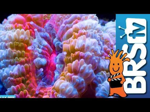 Selecting Corals for Your Reef Tank - EP 3: Fish and Corals