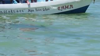 SHARK TOURISTS