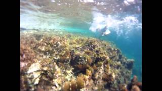 preview picture of video 'Diving near Nissi Beach,Ayia Napa,Cyprus | GoPro HD'