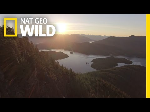 Video Vancouver Island: A Wild World Within Your Reach | wild_life with bertie gregory