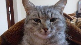 Мой кот Матрос сходит с ума ))