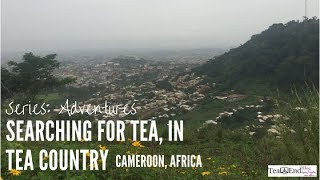 Searching For Tea, In Tea Country
