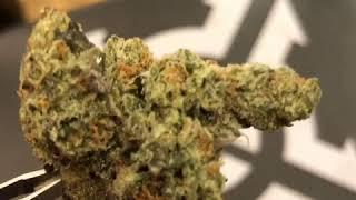 gelato 33 jungleboys - Free video search site - Findclip Net
