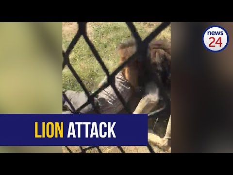 WATCH: Game reserve owner hospitalised after being mauled by a lion (WARNING: NOT FOR SENSITIVE VIEWERS)