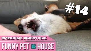 СМЕШНЫЕ ЖИВОТНЫЕ И ПИТОМЦЫ #14 ОКТЯБРЬ 2018 [Funny Pet House] Смешные животные