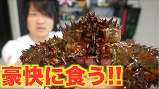幻のカニ!!元気な花咲蟹をそのまま茹でて豪快に食う!!