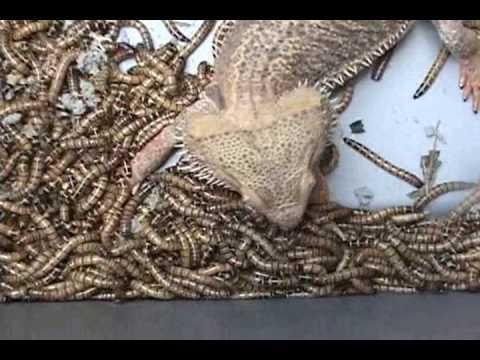 Cat kung paano kilalanin ang mga worm