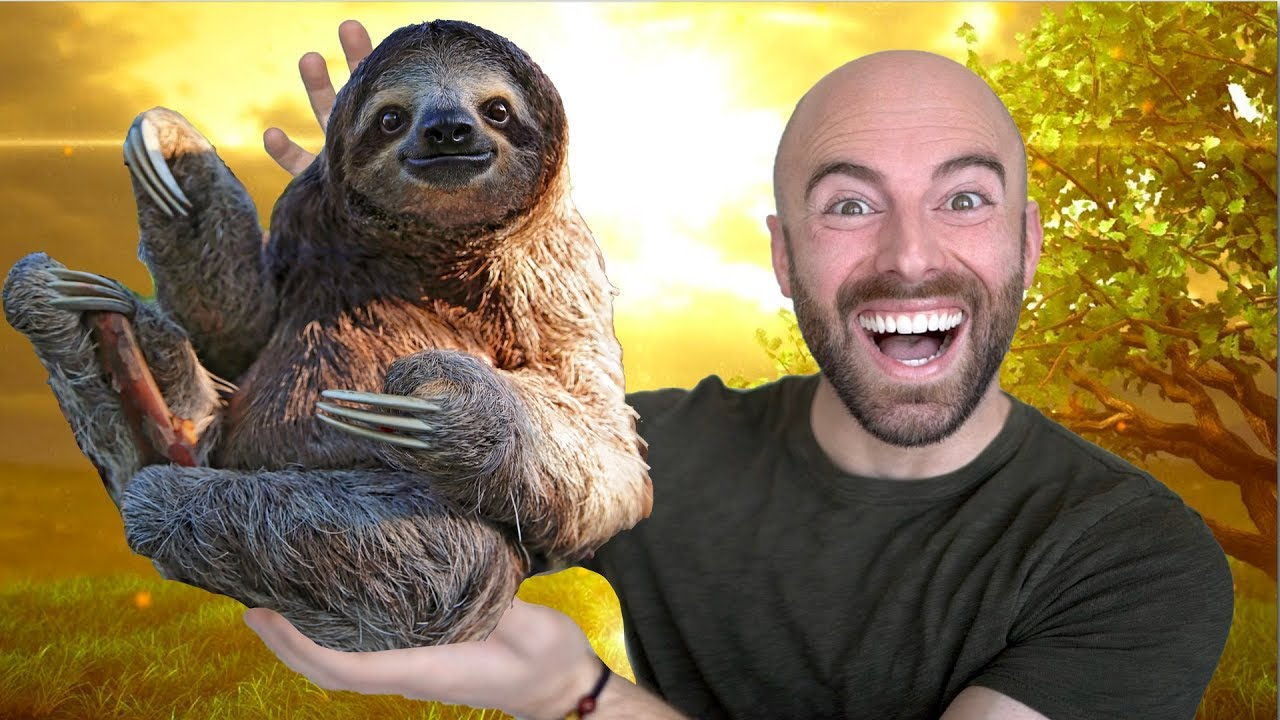 10 Amazing Facts about the Sloth! thumbnail