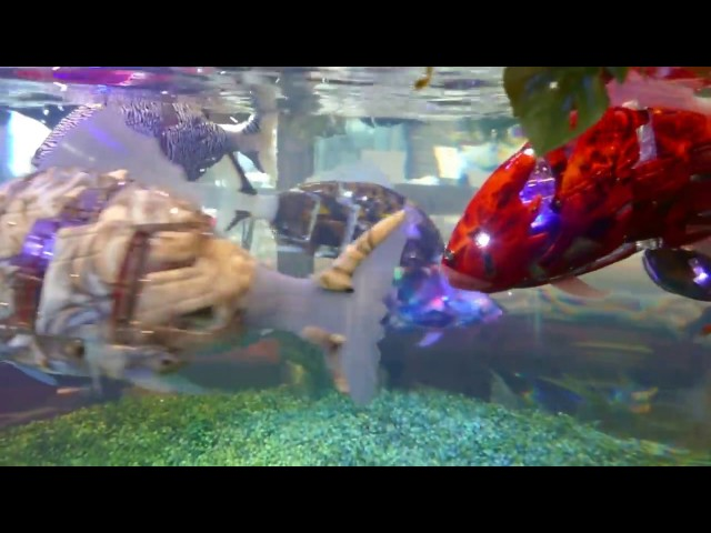 Robotic fish at Henn na Hotel Maihama Tokyo Bay [RAW VIDEO]