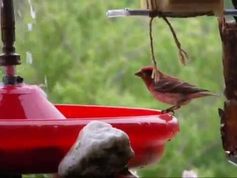 Fabriquer un bain-fontaine électrique pour oiseaux.