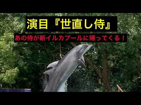 新屋島水族館【公式】9月19日より、イルカライブ再開!!