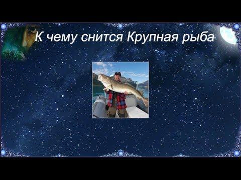 К чему снится Крупная рыба (Сонник)