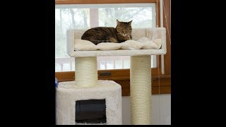 Cat Tree King Unboxing And First Impressions