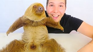 MY CUTE BABY SLOTH (Yes, Shes Real)