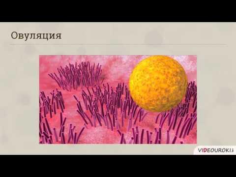 Смотреть онлайн видео Видеоурок по биологии quotСтроение