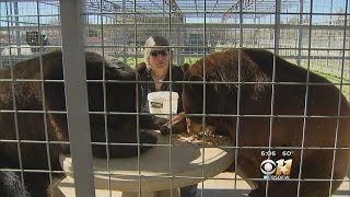 Animal Rescue Ranch Benefitting From Warmer Weather