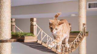 Modular Cat Tree
