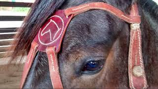 Cavalo Campeiro 41ª expointer