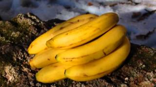 Video Banana Blues by Blueshaman (Live II)