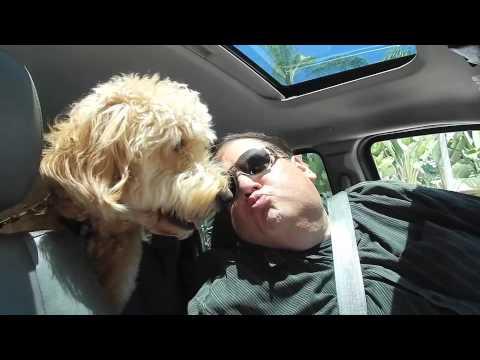 Brad Grunberg, The GetDismissed Man – Annie The Puppy – September 8, 2015