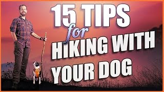 15 Killer Tips To Get Hiking With Dogs!
