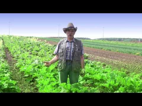 Фильм «Семена и посадочный материал»