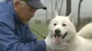 Dogs in Japan Japanology